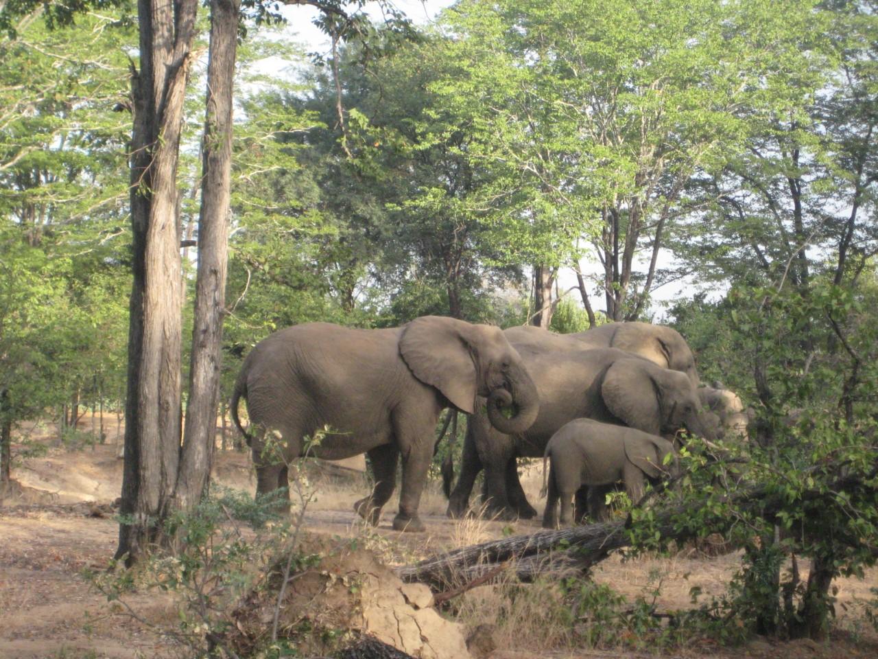Liwonde Nationaal Park