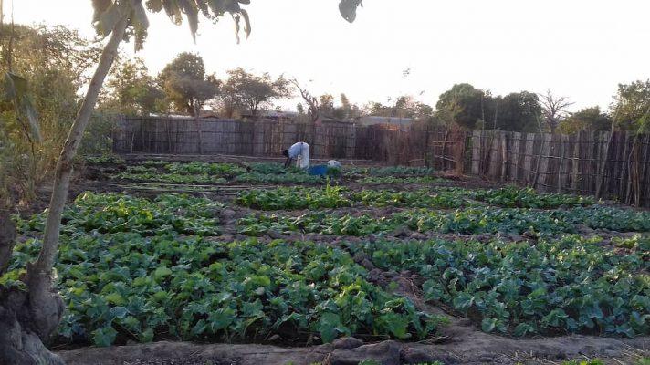 Mensen die in de tuin werken